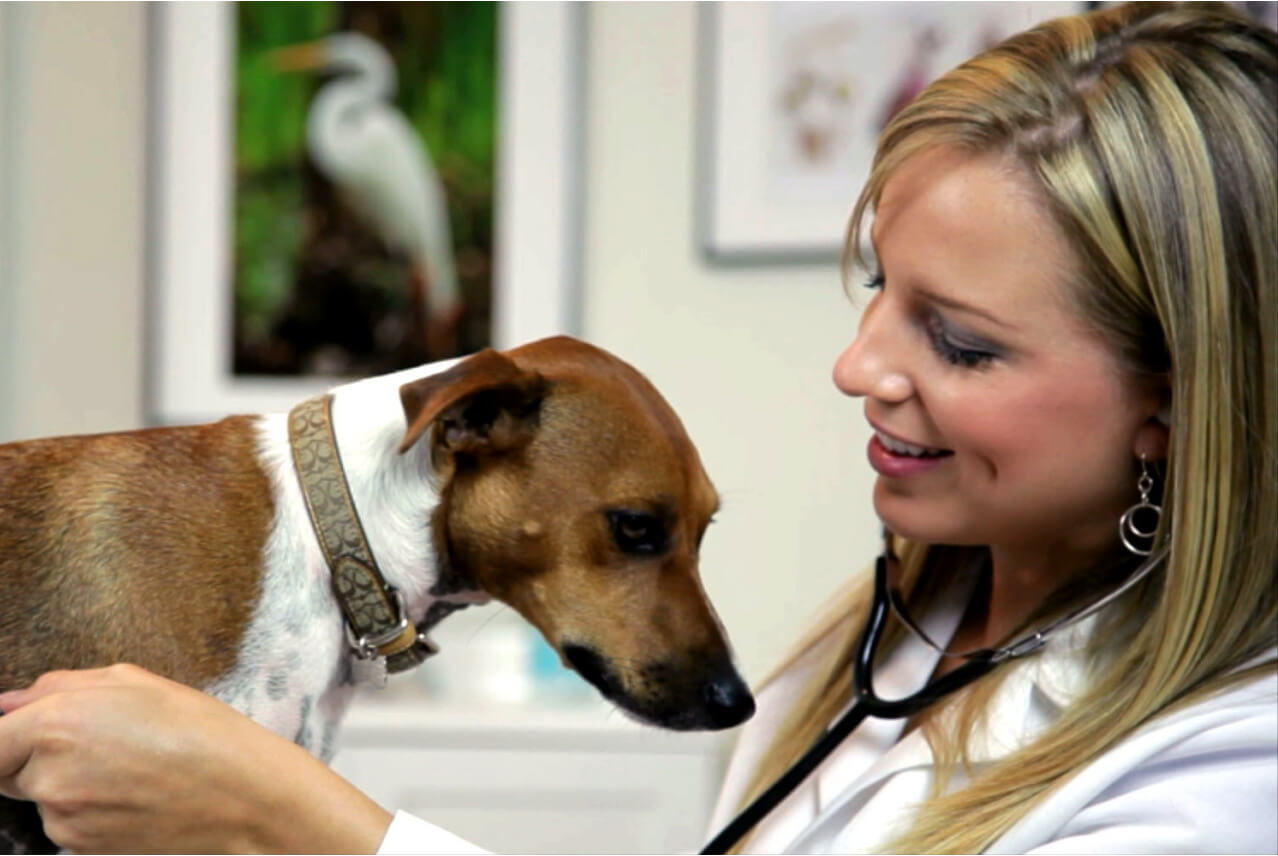 Mars Veterinary Health